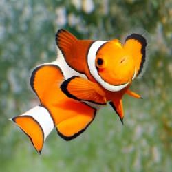 Eau de mon aquarium (eau de mer)