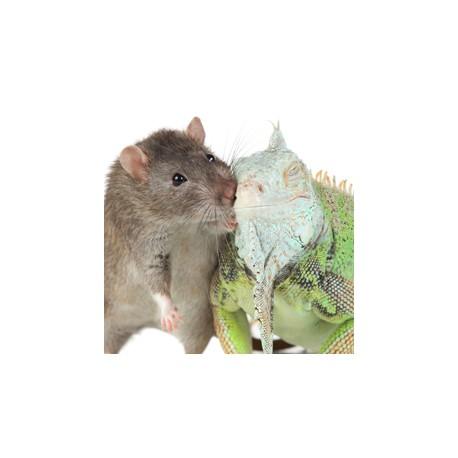 Je souhaite vérifier l'état de santé de mon animal (examen parasitologique complet)