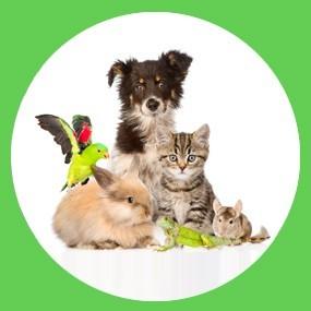 Santé animale
